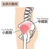 股関節を安定させる小殿筋:筋トレやストレッチを紹介!小殿筋のトレーニングで足が軽くなる!