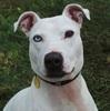 犬は人と暮らす動物 食肉業者から救助された1頭と里親の見つからない2頭の話