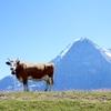 【スイス】アルプスの大自然を満喫!グリンデルワルド、ユングフラウヨッホ、フィルスト