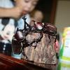 長野・伊那きのこ王国で、カブトムシに触れ合う 入園無料のカブトムシ園が夏休みにオープン 長野県伊那市