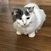 【猫ブログ】猫ちゃんについての名言、格言 part2
