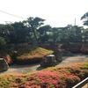 鎌倉でサツキの咲いた枯山水庭園。光明寺庭園、明月院庭園 / 《YCC Temporary 大巻伸嗣》@ YCC ヨコハマ創造都市センター