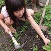 ジャガイモの収穫に行ってきました!