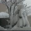 大雪ふたたび