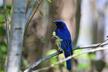 4/13(土) 青い鳥二種