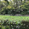小田原城散歩:あじさい花菖蒲祭りへ。