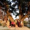 【タイビン】大きな木を神様として祀る不思議な宗教で体験修行【ベトナムの田舎】