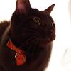 今日の黒猫モモ&白黒猫ナナの動画ー668