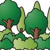 森林浴で自律神経の改善を