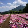 【移住】東京から宮崎県に6年ほど住んでわかったメリット