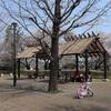 多摩川桜百景 -98. 都立武蔵国分寺公園-