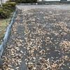 平成最後の12月の落ち葉拾い