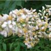 生活と植物:思い出の花:南天