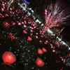 【栃木】おすすめスポットシリーズ④ 「あしかがフラワーパーク イルミネーション」