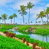 【ハワイ島を自転車で爆走1/2】ワイコロア地区のリゾートを最高に素敵なエリア。マリオット リゾート&スパ