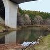 やすらぎの池(千葉県山武)