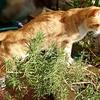 春近しなにかくはへて猫戻る かしまゆう