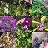 春がそこまでー蝶