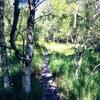 スウェーデンの森の広告