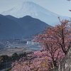 第23回 まつだ桜まつり【中止】 (2021年)