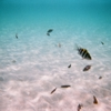 写ルンですで撮った海の中の世界。