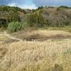 お盆前最後の四街道市物井の里山の谷津田の円福寺様の農園の草刈りをしました。