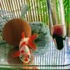 「和金に再挑戦」金魚を、金魚鉢式でシンプルに。