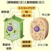 細胞分裂って何?