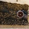 【ポケモンのモンスターボールの虫かごで昆虫ゲット!?今年も夏の風物詩のクワガタを飼い始めた】