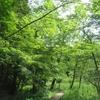 人気シリーズ「こそあどの森の物語」がミュージカルになります!!