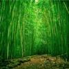 【洒落怖】竹林の廃小屋