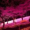 セグウェイで花見もアリかも。桜を堪能できるドライブスポットをご紹介