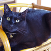 今日の黒猫モモ&白黒猫ナナの動画ー804