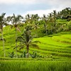 地球絶景紀行 ― バリ島 ―