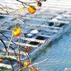 【2019年 伊勢志摩 観光】英虞湾と旬の柿のコラボレーション。地元スタッフが写真で贈るおすすめスポット。