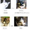 牧場猫関係図