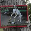 カンクンの公園は犬が掃除をしています((笑))