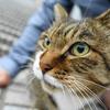 10月前半の #ねこ #cat #猫 その3