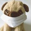 「定期受診日」病院の感染対策はやっぱりすごいなぁと思った一日