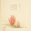 ゆるやか本草学(有毒植物)⑧ カエンタケ(有毒部位:全部位)