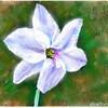 畑の隅の花