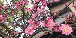 春の鎌倉吟行句会。たい焼きなみへい〜OKASHI 0467〜由比ケ浜散歩