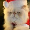 一人ぼっちのクリスマスイブだけど、明日は・・・