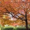 紅葉の季節です♪