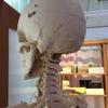 頸椎、頭骨を整えて仕事の効率アップ!
