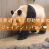 シャンシャン可愛い!上野動物園のパンダを撮影してきた!