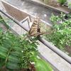 ペットボトルでアゲハチョウの幼虫の飼育