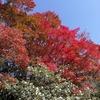 京都東山方面散策:銀閣寺入り口→法然院→哲学の道→南禅寺→水路閣