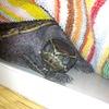布団で眠る亀