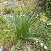 野草咲き乱れる庭